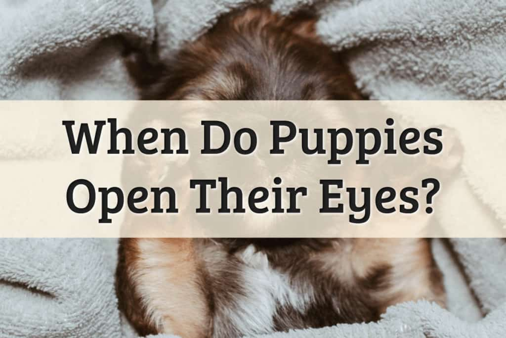 When do Puppies Open Their Eyes Feature Image