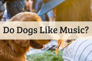 Do Dog Like Music Featured Image