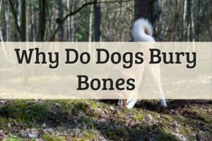 Why Do Dogs Bury Bones Featured Image