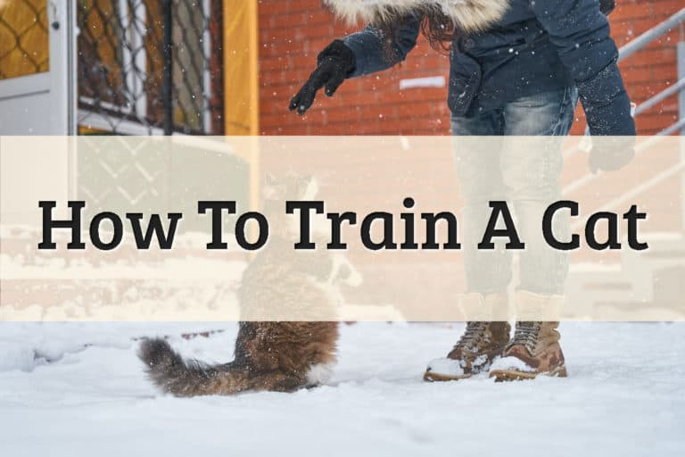 A Cat In A Snow Trying To Master A New Tricks & Skill Feature Image