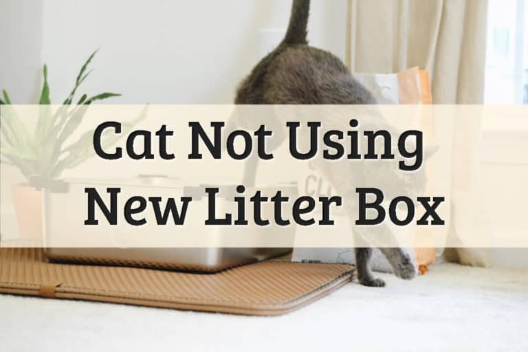 A Feline Just Finished Urinating In The Box Feature Image