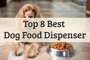 Best Automatic Dog Feeders-A Dog With Her Food Bowl Ready Feature Image
