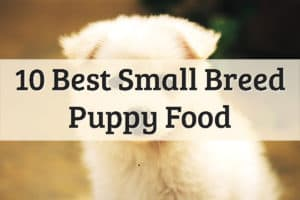 Best Dog Food For Small Breed Puppy Life Stage Feature Image