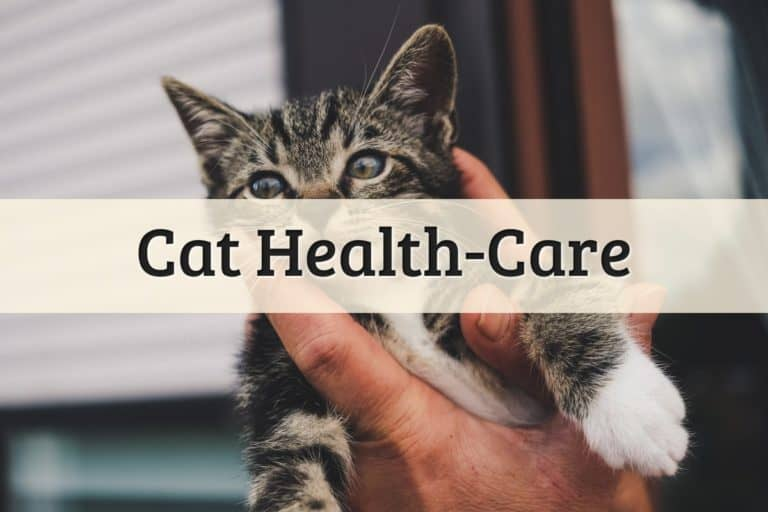 Cat Health-Care Featured Image