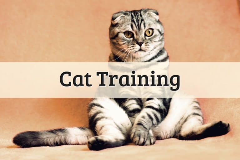 Cat Training Featured Image