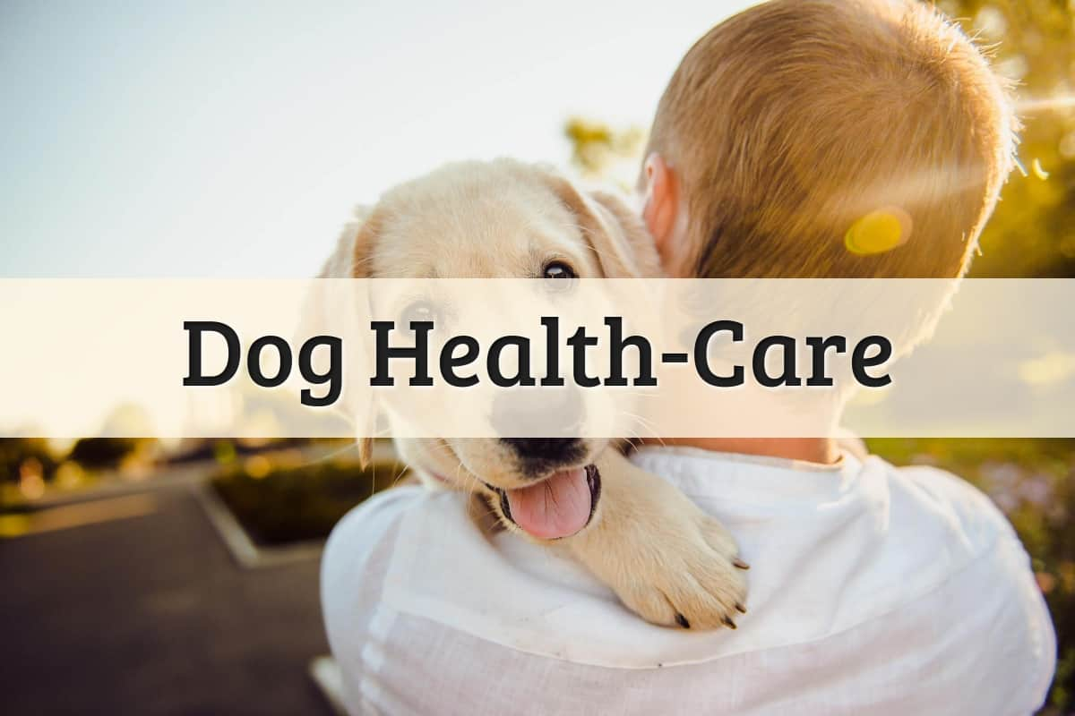 Dog Health Care Featured Image