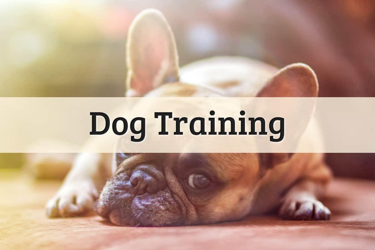 Dog Training Featured Image
