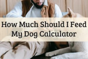 How Much Should I Feed My Dog Calculator Feature Image