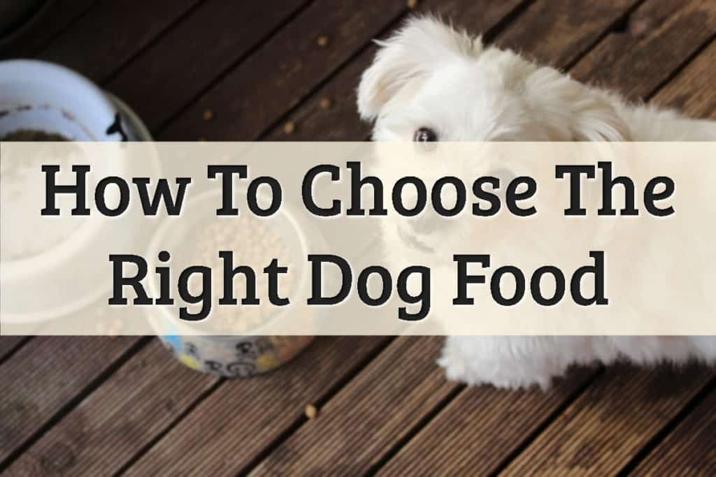 How To Choose Dog Food Feature Image