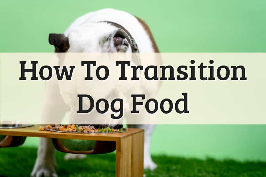 How To Transition Dog Food Feature Image