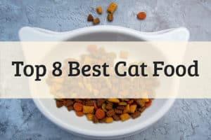Human-Grade Cat Food Best Grain-Free Dry Foods Feature Image