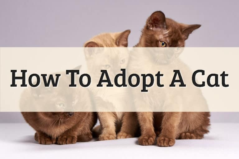 Three Cute Kitten Ready for Adoption Feature Image