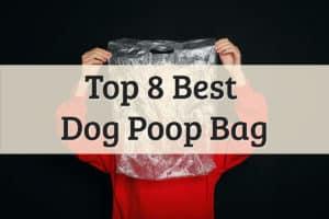 Woman Holding AmazonBasics Dog Waste Bags Feature Image