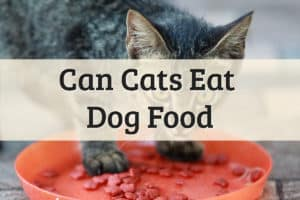 Can I Feed My Cat Dog Food Feature Image