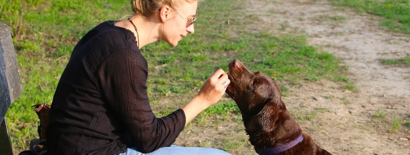 Feeding Your Dog With High-Quality Meal