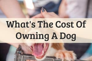 How Much Does A Dog Cost Feature Image