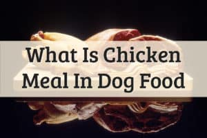 What Is Chicken Meal In Dog Food Feature Image