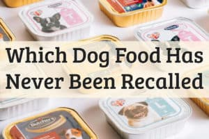 Which Dog Food Has Never Been Recalled Feature Image